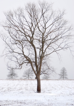 Winter, 2009